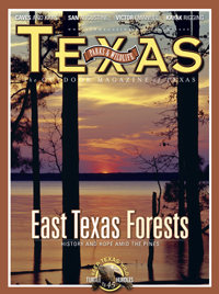 June 2009 cover image loblolly pines at Sam Rayburn