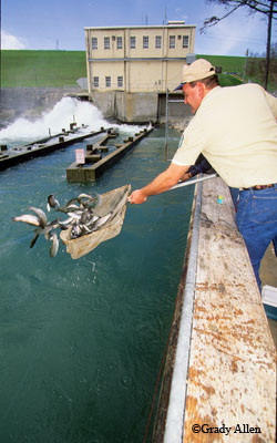 Guadalupe river gives texans a chance to fish for trout for Guadalupe river trout fishing