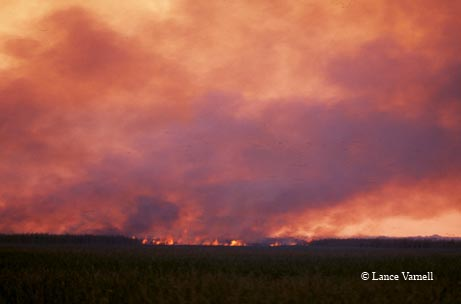 A fire burns through the landscape at Anahuac National Wildlife Refuge.