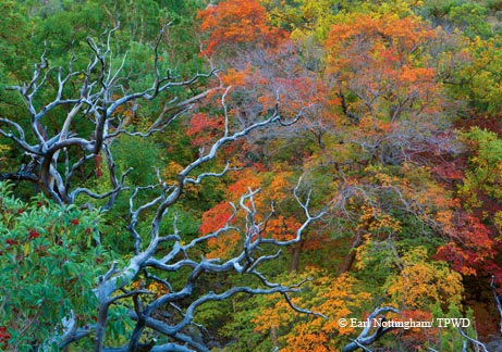 Autumn color goes on display in McKittrick Canyon at Guadalupe Mountains National Park.