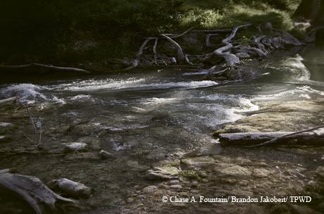The waters of the upper Guadalupe River reflect sunlight through the trees. By Brandon Jakobeit.