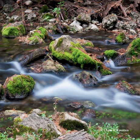 Spring-fed Honey Creek washes over limestone rocks, moss and cypress roots.