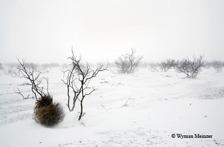 A tumbleweed finds respite in the clutches of a mesquite shrub during a winter squall in Dickens County.