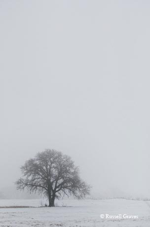 A lone tree in the snow near Childress