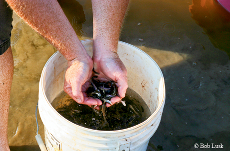Tips To Transform Your Pond Into Angling Heaven Tpw