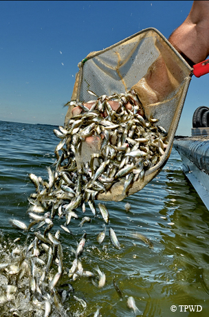 tpwd biologists persevere to produce hybrid striped bass|| tpw, Reel Combo