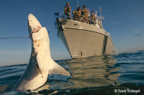 Game wardens hooking poachers in the gulf tpw magazine for Shark fishing games