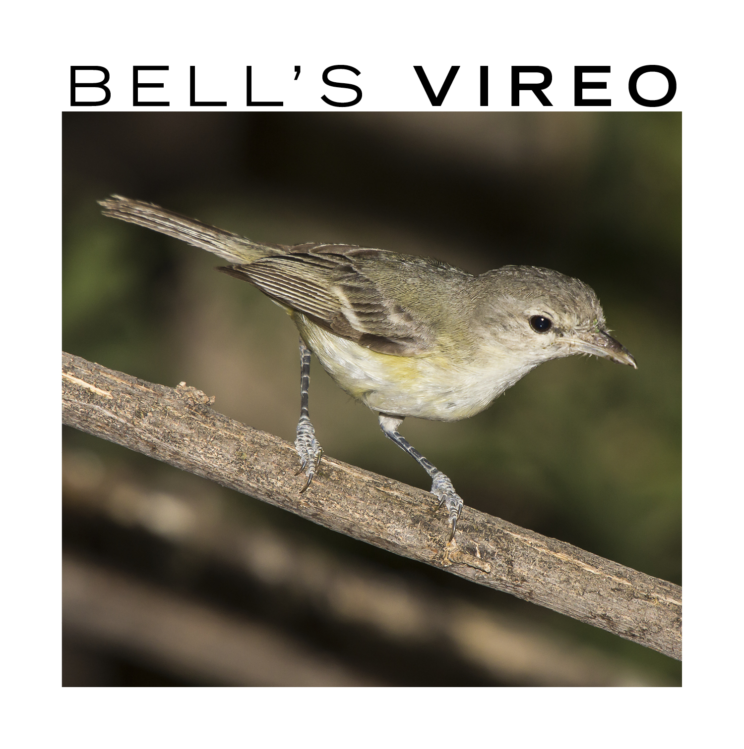 The Top 10 Bird Songs in Texas|| TPW magazine|August