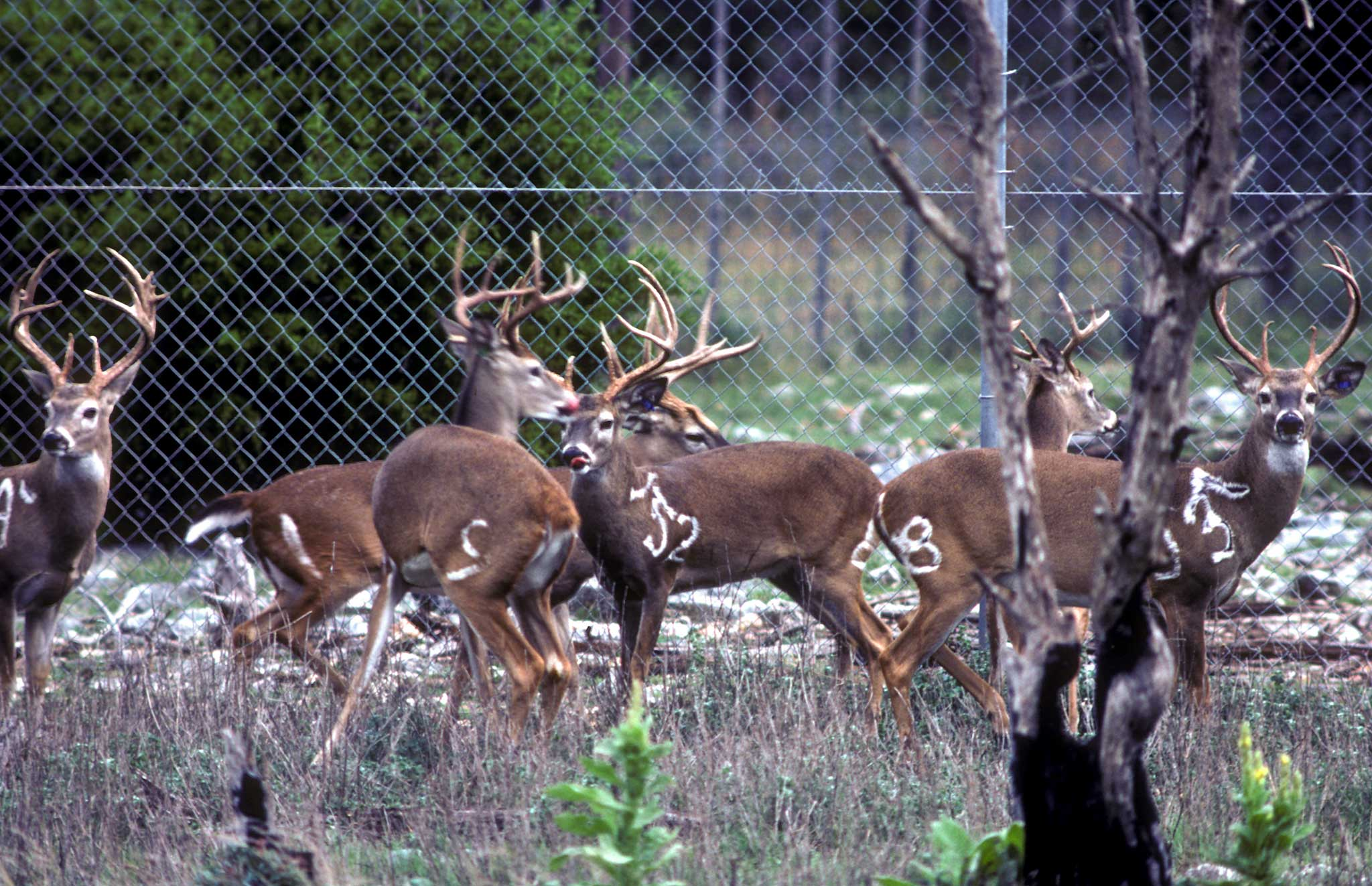 The Epicenter of Deer Research November 2020  TPW magazine